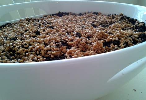 03 wheat grass ceramic bowl