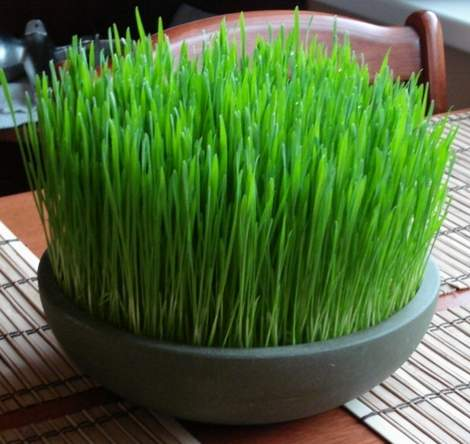 wheat grass decor 03