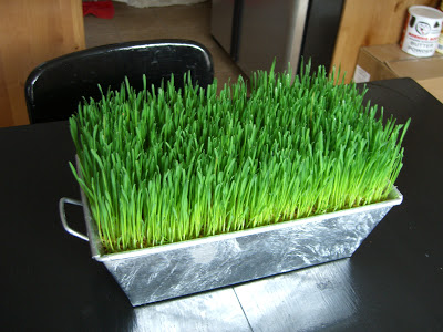 wheat grass decor 07