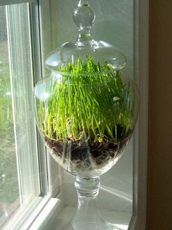 wheat grass decor 10