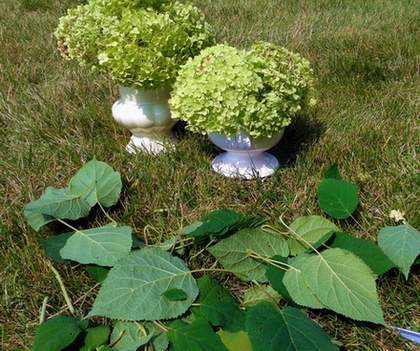 03 top of china cabinet hydrangeas arrange