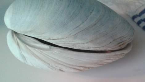 05 beach shells tip