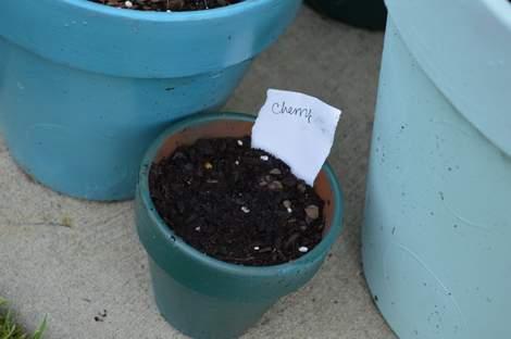 veggie garden 04
