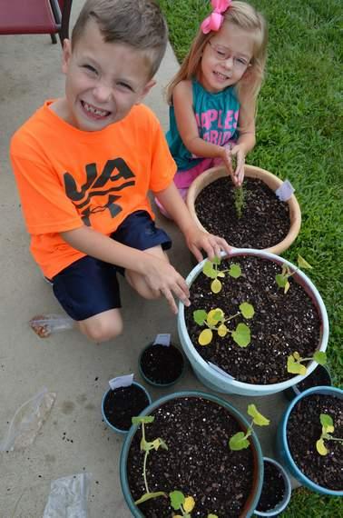 veggie garden 05