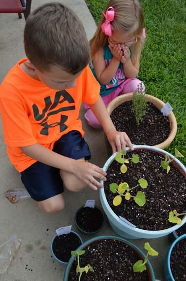 veggie garden 06