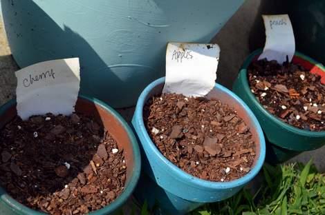 garden tags 06