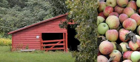 apple orchard red barn banner